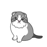 スコティッシュフォールド(猫)のかわいい手書き風イラスト