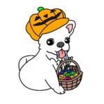 ハロウィンのかぼちゃを被ったチワワ(犬)