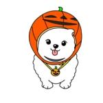 ハロウィンのかぼちゃを被ったポメラニアン(犬)