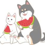 スイカを食べる犬と猫のイラスト