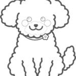 トイプードルのぬり絵イラスト