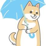 雨なので傘をさす柴犬のイラスト