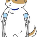 怪我(骨折)をしている犬のイラスト