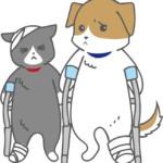 怪我(骨折)をしている犬猫のイラスト