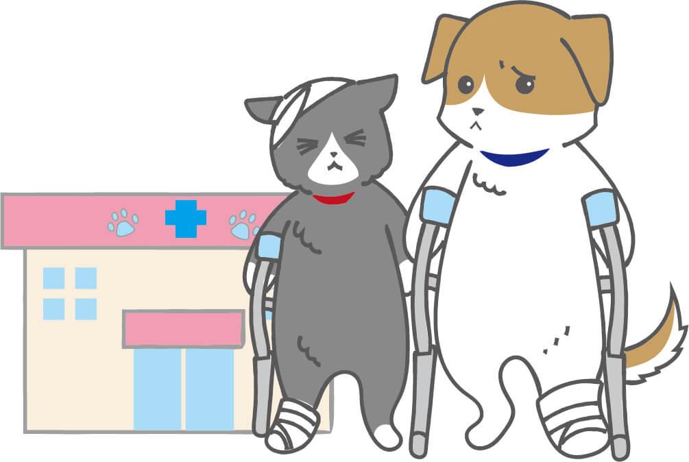 怪我(骨折)をしている犬猫と動物病院のイラスト
