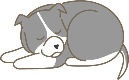 グレーのピットブル(寝ている)イラスト