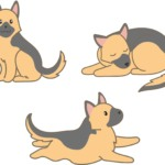 犬・シェパード(走る・座る・寝ている)