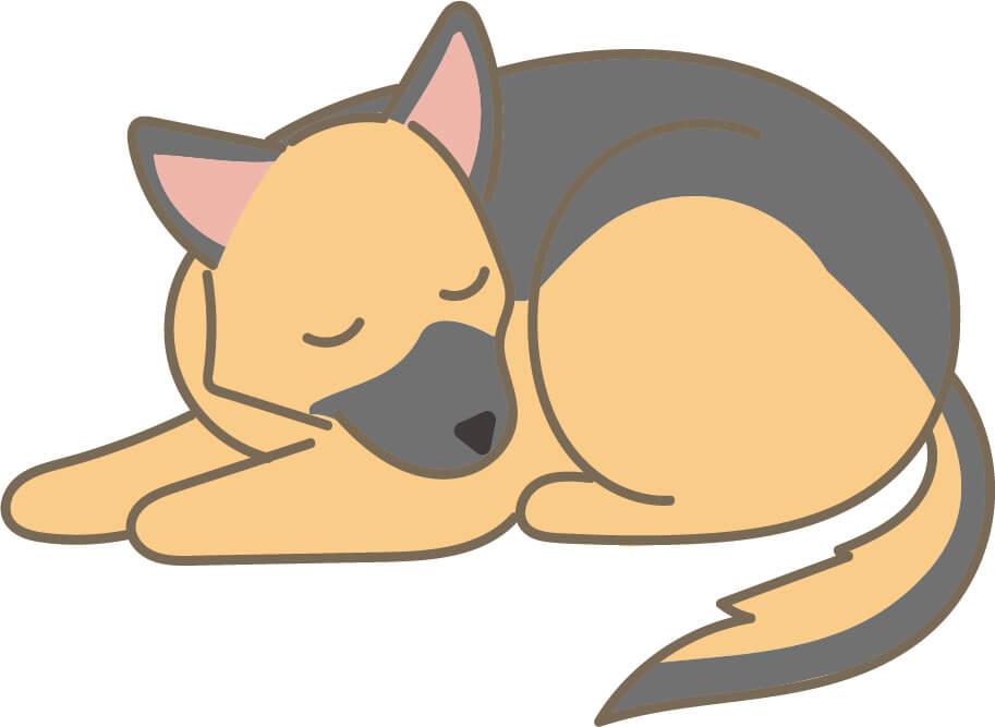 犬・シェパード(寝ている)
