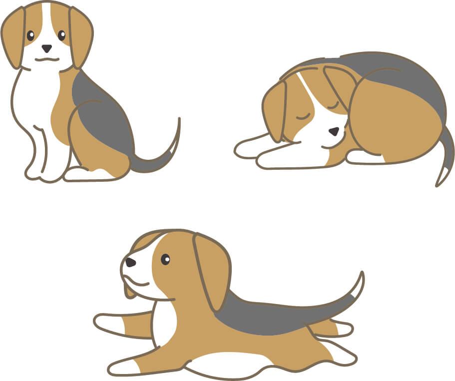 ビーグル犬(走る・座る・寝る)