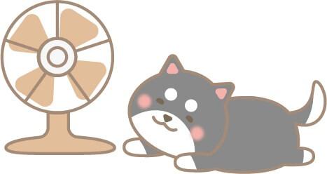 扇風機にあたる柴犬(黒色)