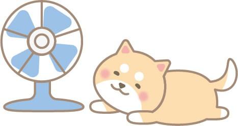 扇風機にあたる柴犬(茶色)
