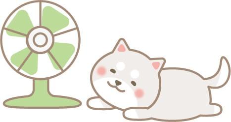 扇風機にあたる柴犬(白色)