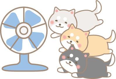 扇風機にあたる柴犬(白色・黒色・茶色)
