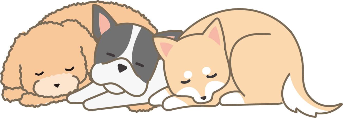 寝ている犬(トイプードル・フレンチブルドッグ・柴犬)