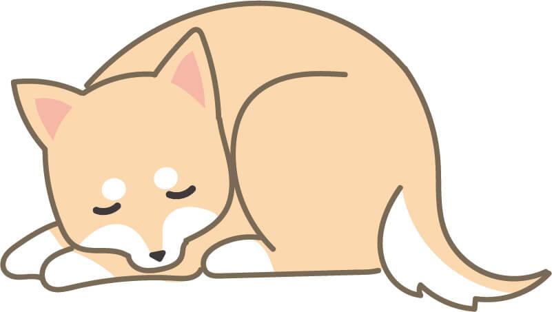 寝ている柴犬(左)