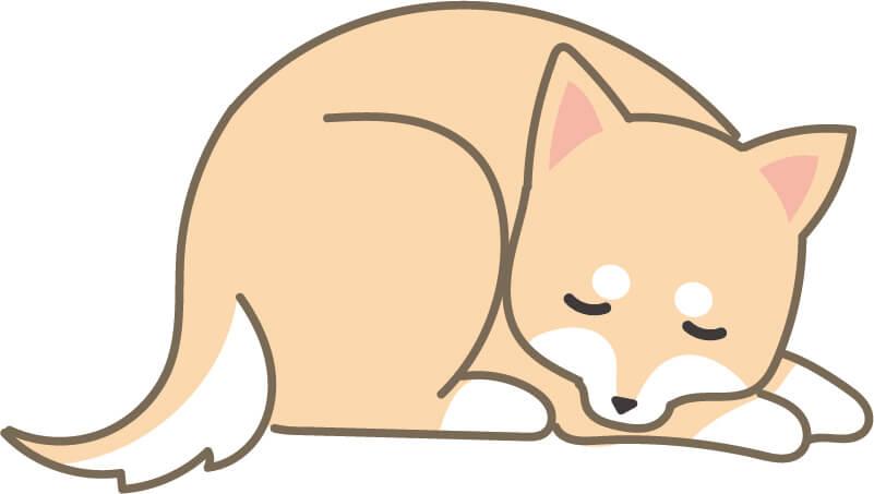 寝ている柴犬(右)