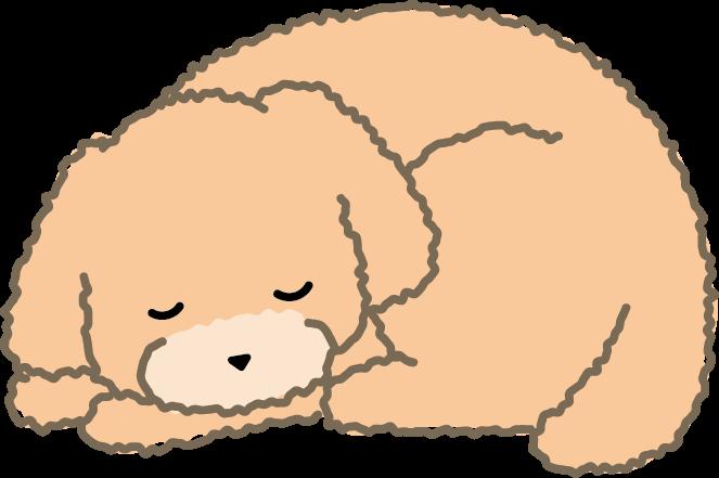 寝ているトイプードル(左)