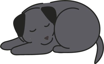 寝ているラブラドール(黒色)