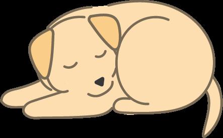 寝ているラブラドール(黄色)
